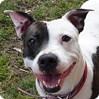 Adopt A Pet :: Clementine - Kennel #45 - Valley View, OH