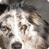 Adopt A Pet :: Bandit - Charlemont, MA