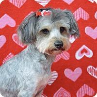 Adopt A Pet :: Mona - Irvine, CA