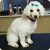 Adopt A Pet :: Marlowe - DAYTON, OH