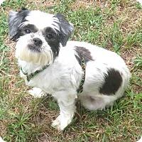 Adopt A Pet :: Matilda - Bridgewater, NJ