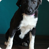 Adopt A Pet :: Alisha - Waldorf, MD