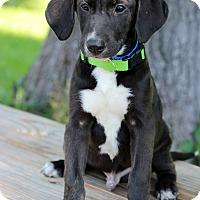Adopt A Pet :: Roy - Waldorf, MD