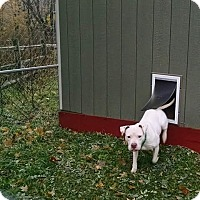 Adopt A Pet :: Gwen - Cherry Valley, NY