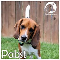 Adopt A Pet :: Pabst - Pittsburgh, PA