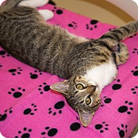 Adopt A Pet :: A..  Orphelia - Mooresville, NC