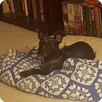 Adopt A Pet :: Penelope - Spring, TX