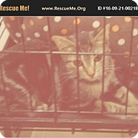 Adopt A Pet :: Laverne - snuggly - Madison, TN