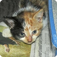 Adopt A Pet :: Cat 0002 - Rocky Mount, NC