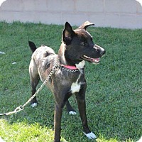 Adopt A Pet :: Penny - Rathdrum, ID