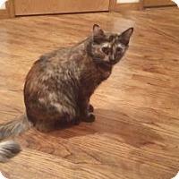 Adopt A Pet :: Juniper - Fort Collins, CO
