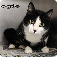 Adopt A Pet :: Boogie - Texarkana, AR