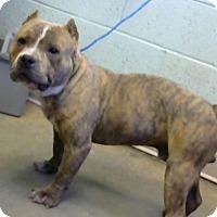 Adopt A Pet :: Sammy-adopted - Decatur, GA