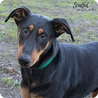 Adopt A Pet :: Muneca - Tracy, CA