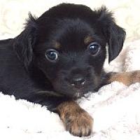 Adopt A Pet :: Dharma Dabinett - Houston, TX