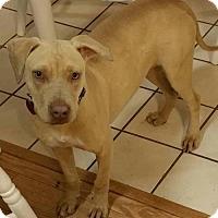 Adopt A Pet :: Nina - Von Ormy, TX