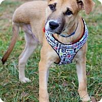 Adopt A Pet :: Oren ADOPTION PENDING - Waldorf, MD