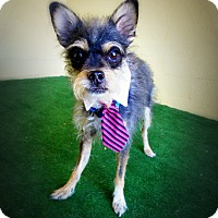 Adopt A Pet :: Mr. Bird - Casa Grande, AZ