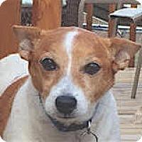 Adopt A Pet :: Spot - Pulaski, TN