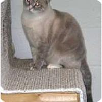 Adopt A Pet :: Spencer - Stafford, VA