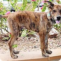 Adopt A Pet :: Klondike - Gilbert, AZ