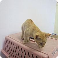 Adopt A Pet :: Spice - Bunnell, FL