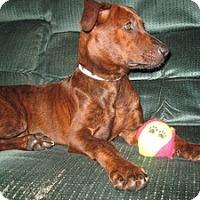 Adopt A Pet :: Tiga - Marlton, NJ