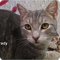 Adopt A Pet :: Grady - Portland, OR