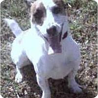 Adopt A Pet :: CHIPPER - Phoenix, AZ