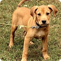 Adopt A Pet :: Brewster - Staunton, VA