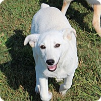 Adopt A Pet :: Lakely ($50 off) - Staunton, VA