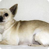 Adopt A Pet :: Taquito - Cumberland, MD