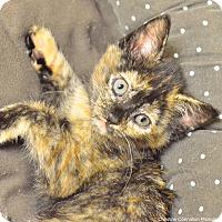 Adopt A Pet :: Lilith - Island Park, NY