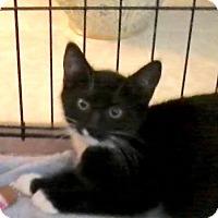 Adopt A Pet :: Oatmeal - East Brunswick, NJ