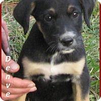 Adopt A Pet :: Denver-ADOPTION PENDING - Marlborough, MA
