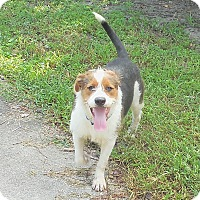 Adopt A Pet :: Theo - Ormond Beach, FL