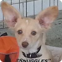 Adopt A Pet :: Snuggles - El Cajon, CA