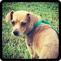Adopt A Pet :: Jenkins - Grand Bay, AL