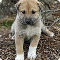 Adopt A Pet :: Haven - Alpharetta, GA