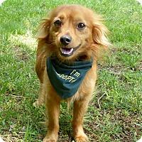 Adopt A Pet :: Jameson - Mocksville, NC