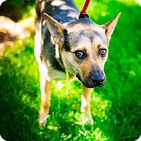 Adopt A Pet :: Fiona (Has application) - Washington, DC