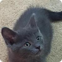 Adopt A Pet :: Liana - Grand Ledge, MI