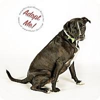 Adopt A Pet :: Jack - Gillsville, GA