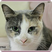 Adopt A Pet :: Karma - No Adoption Fee! - New Richmond,, WI