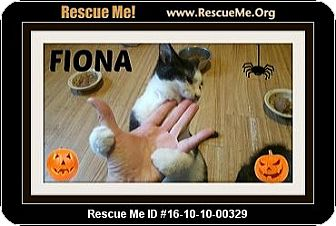 Domestic Shorthair Kitten for adoption in Highland, Michigan - Fiona