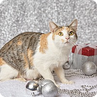 Adopt A Pet :: Lady Kissy McSassy - Harrisonburg, VA
