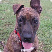 Adopt A Pet :: LOLA - Wilmington, NC