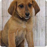 Adopt A Pet :: Ethan - Waldorf, MD
