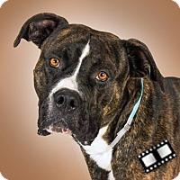 Adopt A Pet :: Koas - Prescott, AZ