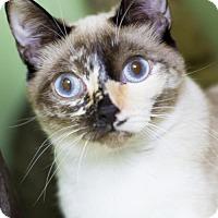 Adopt A Pet :: Mitzi Gaynor - Auburn, CA